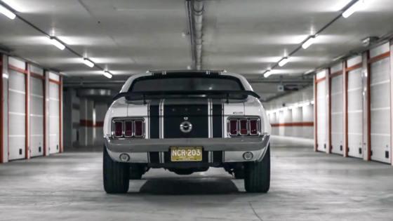 Snow White: the Mustang from Belgium